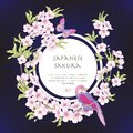 Illustrations with Japanese blossom pink sakura and birds with p Royalty Free Stock Photo