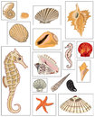 Illustrations of mussels and sea horse clams handmade digital painting by me Royalty Free Stock Images