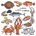 Illustrations of sea food products for gourmet menu. Vector pictures of squid, oyster and different fishes