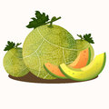 Illustrator of melons fruit and vegetables Royalty Free Stock Photo