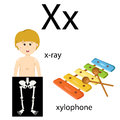Illustrator of x vocabulary for education Royalty Free Stock Photos