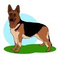 Illustrazione del cane di pastore tedesco Immagine Stock Libera da Diritti