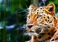 Ilustracyjny jaguar Obrazy Royalty Free