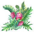 Ilustration of a bouquet with pink Protea flowers and tropical plants.
