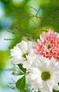 Image of beautiful flowers on a green background closeup Royalty Free Stock Photo