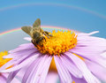 Image of beautiful violet flower and bee detail closeup Royalty Free Stock Photo