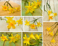 Image of beautiful yellow day-lily flowers against the sun Royalty Free Stock Photo