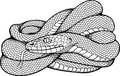 Image of coiled snake