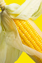 Image of Corn Royalty Free Stock Image