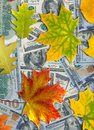 Image of dollars and autumn leaves Royalty Free Stock Photo