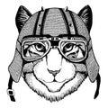 Image of domestic cat wearing biker helmet Animal with motorcycle leather helmet Vintage helmet for bikers Aviator