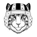 Image of domestic cat Wild animal wearing rugby helmet Sport illustration