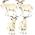 Image of goat idea come from the it so cool Royalty Free Stock Photo