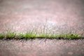 Grass Through Concrete Sidewalk 02 Royalty Free Stock Photo