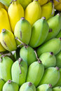 Image of green bananas in a tree thailand Royalty Free Stock Photography