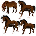 Image of horse idea come from the it so cool Stock Photography