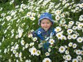 Beautiful child in the flower-bed of camomiles Royalty Free Stock Photo