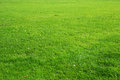 Natural green grass background texture Royalty Free Stock Photo