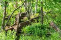 overgrown tracks with bushes and trees Royalty Free Stock Photo