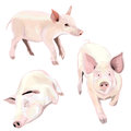 Image of pig idea come from the it so cool Royalty Free Stock Photos