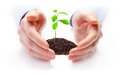 Image of plant between hands Stock Photo