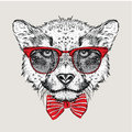 Image portrait cheetah in the cravat and with glasses vector illustration Stock Images