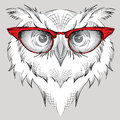 Image Portrait owl in the glasses.  / african / indian / totem / tattoo design. Use for print, posters, t-shirts. Hand draw Royalty Free Stock Photo