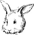 Image of a rabbit with long ears Royalty Free Stock Photography