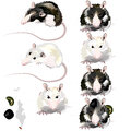 Image of rat idea come from the it so cool Royalty Free Stock Photography