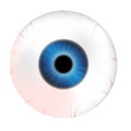 Image of realistic human eye ball with colorful pupil, iris. Vector illustration isolated on white background. Royalty Free Stock Photo