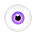 Image of realistic human eye ball with colorful pupil, iris. Vector illustration  on white background. Royalty Free Stock Photo