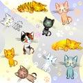 Image sans joint sur un thème de chat Photos libres de droits