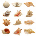 Image of seashells on white background Royalty Free Stock Photo
