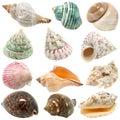 An image of seashells on white background Royalty Free Stock Photo