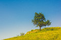 Image of single tree over blue sky background Royalty Free Stock Photo