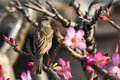 Image Of Sparrow On Nature Bac...