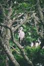 Image of stork perched on tree branch. Royalty Free Stock Photo