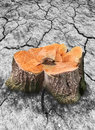Image of tree stump and broken dry soil Stock Photography