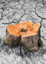 Image Of Tree Stump And Broken...