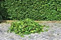 An Image of trimming a hedge, gardening Royalty Free Stock Photo