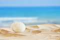 Image of tropical sandy beach and seashell Royalty Free Stock Photo