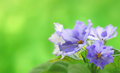 Image of violets on a beautiful soft background close up Stock Photo