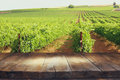 Image of wooden table in front of Vineyard landscape Royalty Free Stock Photo