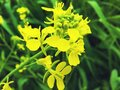 A yellow flower  the best flower closeup on dreamstime Royalty Free Stock Photo
