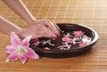 Imagem do fim acima das mãos e de rosas fêmeas Foto de Stock Royalty Free