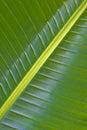 Imagem verde em folha de palmeira da natureza Imagem de Stock