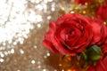 Imitation roses horizontal red on bokeh background Stock Photos