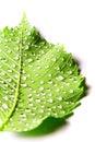 Immagine del foglio verde con le gocce di acqua Fotografia Stock Libera da Diritti