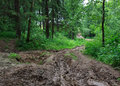 Impassable forest road of mud and clay offroad Stock Photos