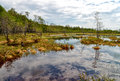Impenetrable swamp in the Siberia Royalty Free Stock Photo